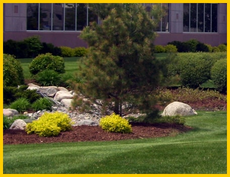Landscaping Maintenance Paradise Nevada